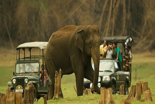 Coorg Safari in Jeep with Ibnisprings